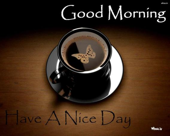 Good Morning Looney Darindey